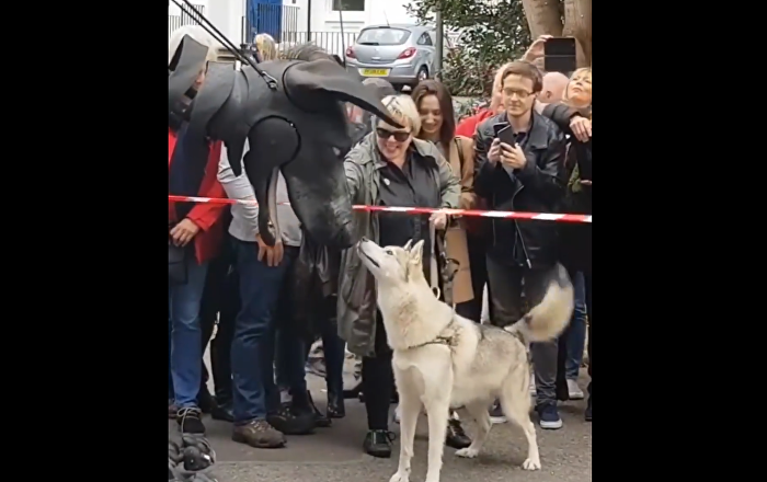 Dog meets giant puppet