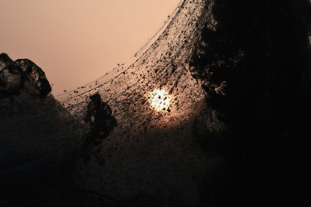 Arachnid Paradise: Greek Lake Gets Govered in Gigantic Spider Webs