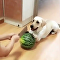 Dog and Watermelon