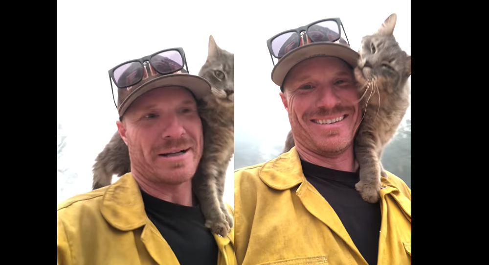 Good Human! Cat Trapped in US Wildfire Thanks Rescuer