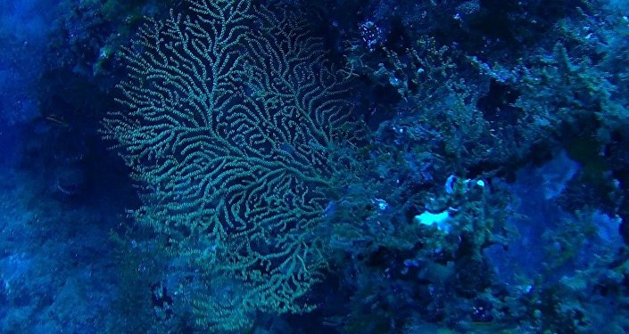 Scientists say some corals and sponges on the ocean floor could one day contain cures for cancer and other diseases