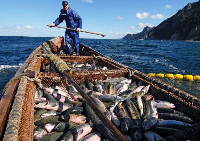 Fishermen are Trying to Catch Salmon Near the Okhotsk Sea Embankment in Kunashir Island
