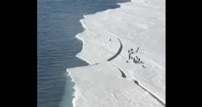 Penguin Makes Leap Of Faith To Safety