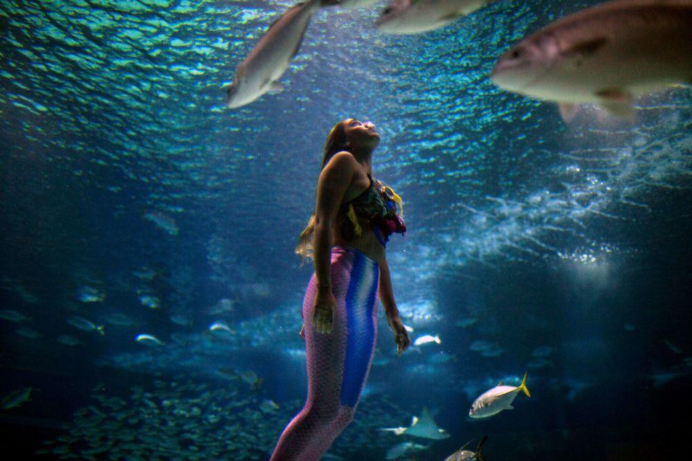 Cтудентка-морскоq биолог Изабела Кардозу изображает русалку в аквариуме Рио-де-Жанейро, чтобы привлечь внимание к проблеме загрязнения океана