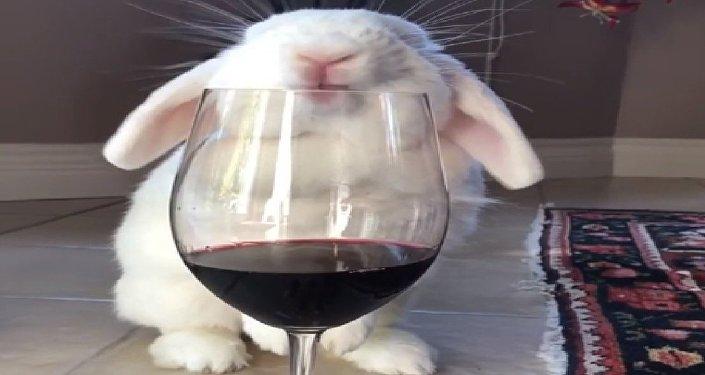 Bunny wine