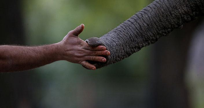 elephant meets human