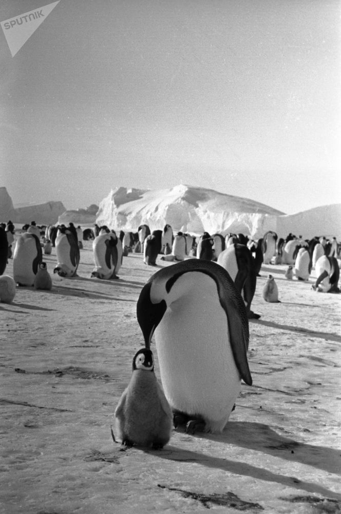 Blast From the Past: History of Antarctica Throughout the Years