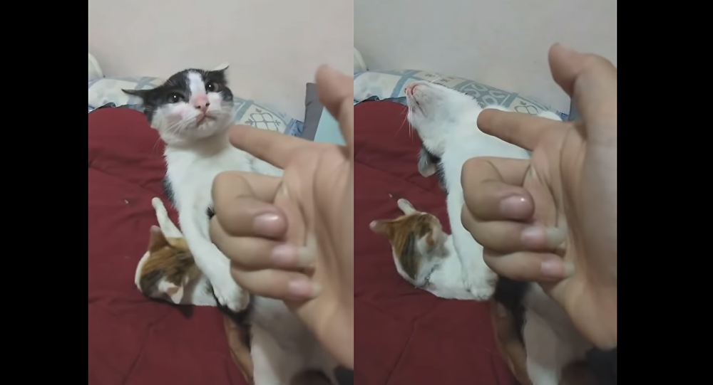 Talented Kitten Gives Award-Worthy Performance