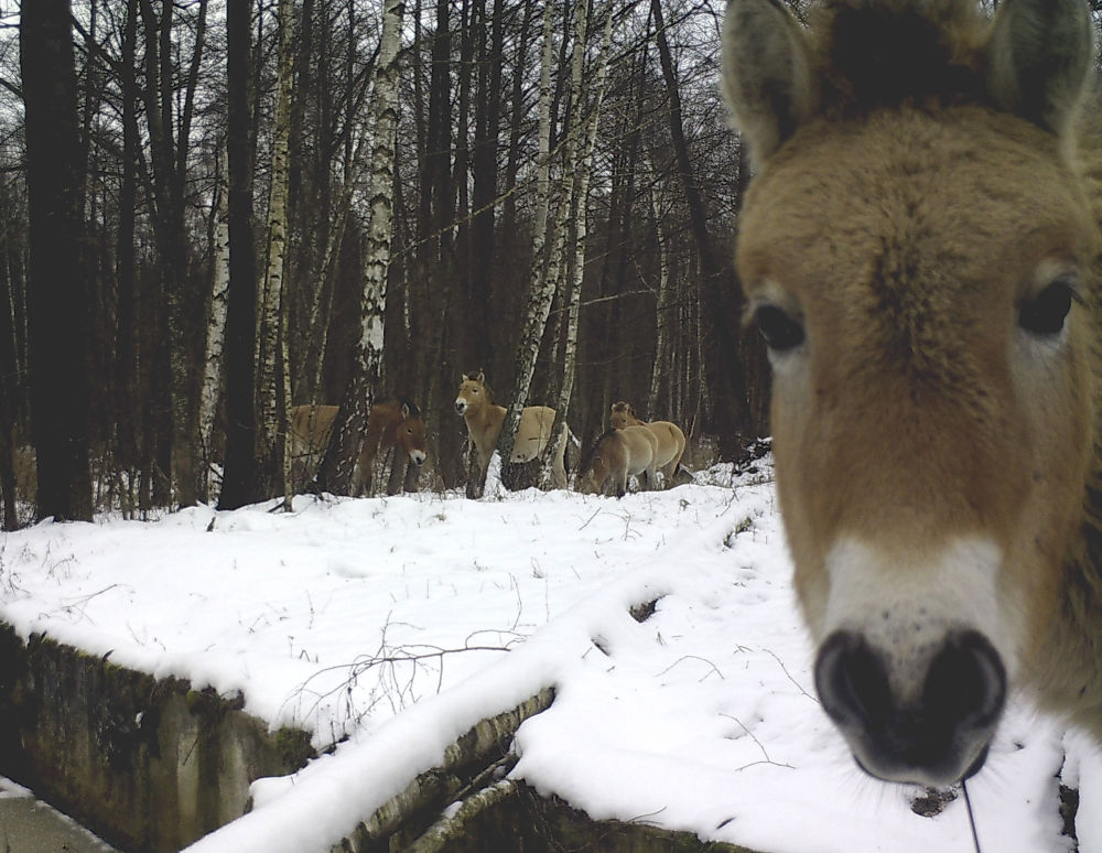 Nature's Revenge: Wildlife in the Chernobyl Exclusion Zone