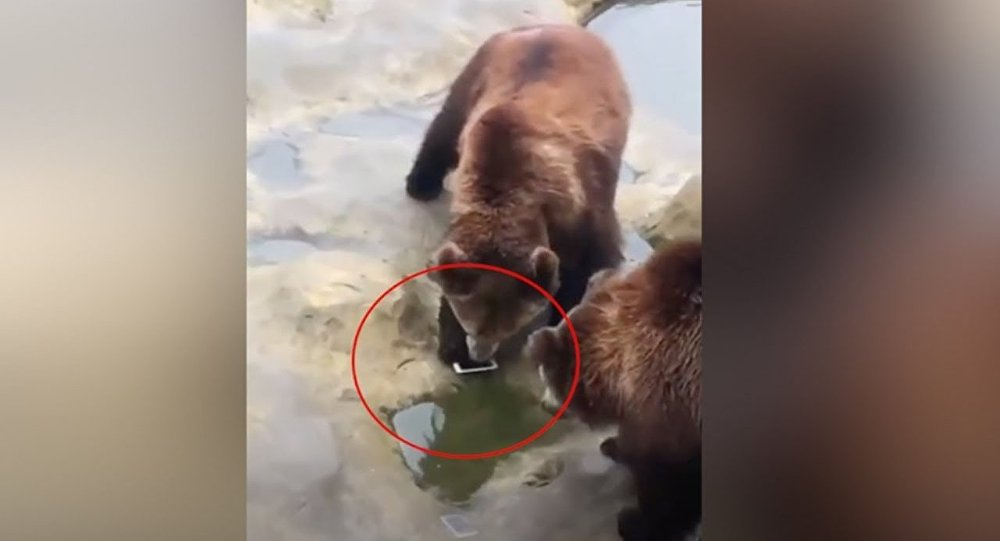 Embarrassed! Man accidentally throws iPhone to bears at a zoo