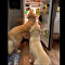 Dogs and fridge