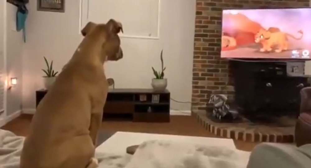 Dog Cries While Watching Lion King Movie