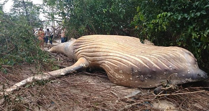 40kg of plastic found in whale that starved to death