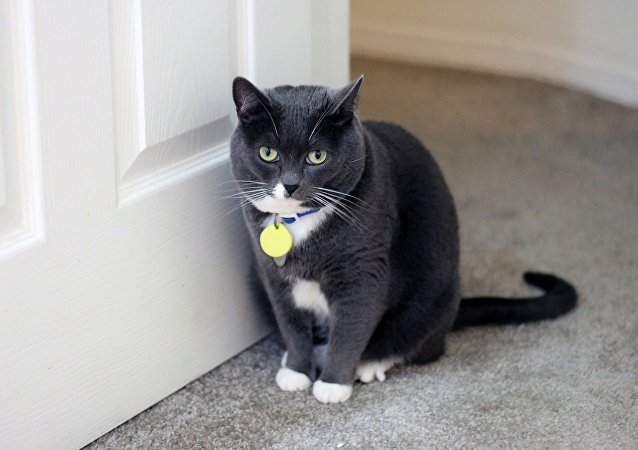 A cat standing next to a door