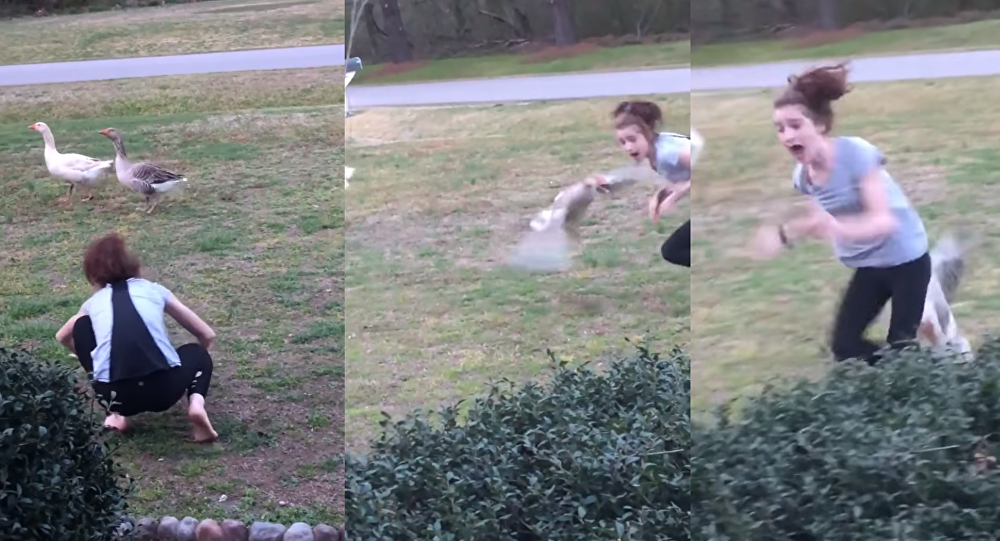 All Fight, No Flight: US Teen Taunts the Wrong Goose