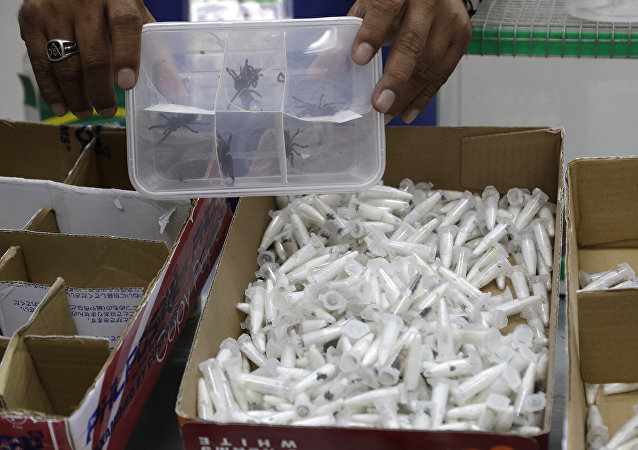 A staff of the Philippine Department of Environment and Natural Resources shows plastic containers with Tarantulas at their office in metropolitan Manila, Philippines on Wednesday, April 3, 2019.
