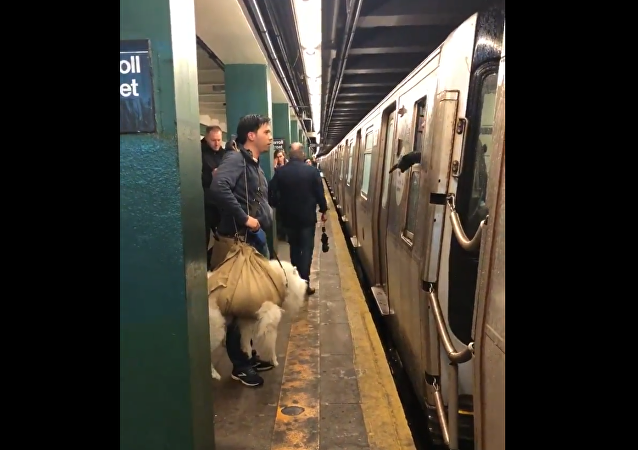 Video of 'Wrapped' Dog Denied Ride Sparks Debate Over NY Subway's Carrier Policy