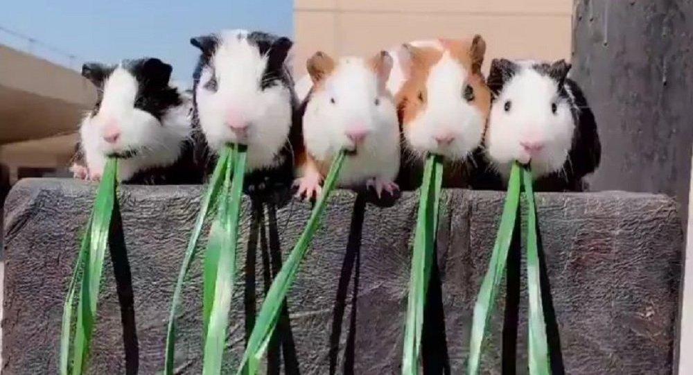 cutie.animals.page
