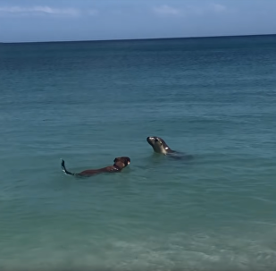 Dog Joins Social Sea Lion for a Swim
