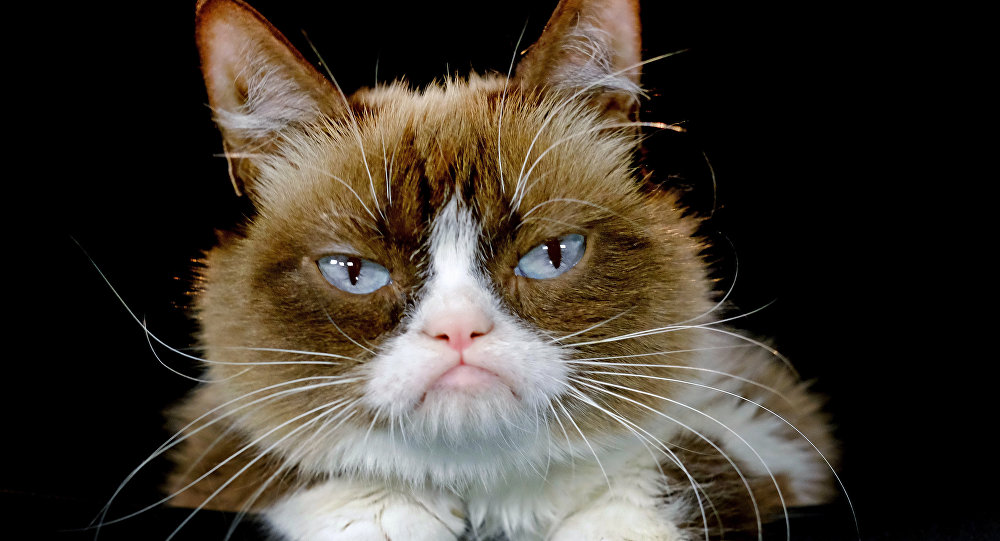 """This Dec. 1, 2015 file photo shows Grumpy Cat posing for a photo in Los Angeles. Grumpy Cat is joining the cast of the Broadway musical """"Cats"""" on Friday, Sept. 30, 2016"""