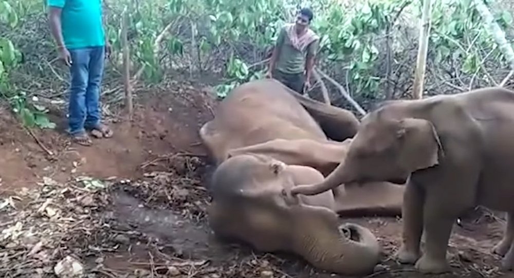 Heartbreaking moment elephant tries to wake up its dead mother
