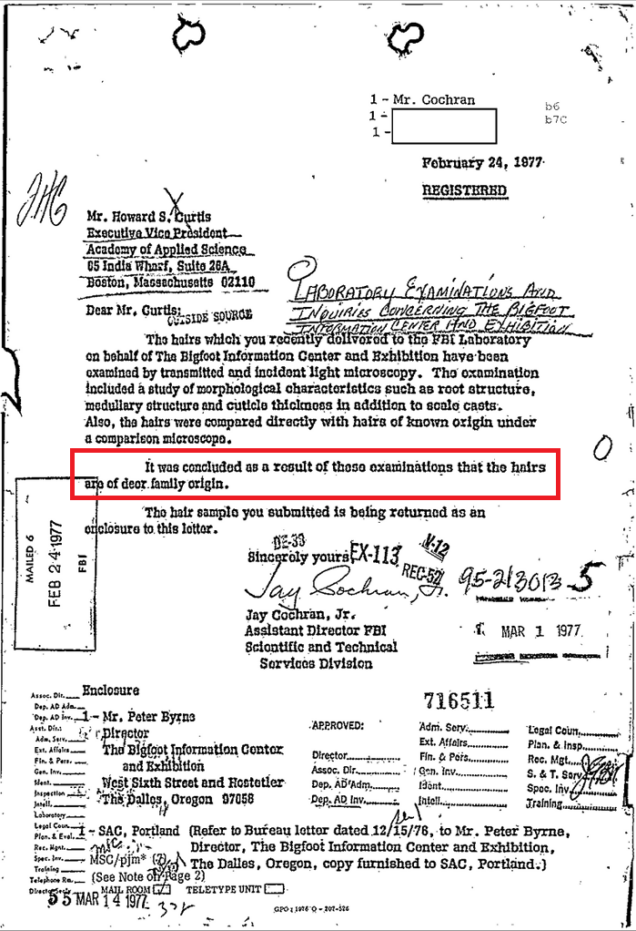 A letter from the FBI in response to an inquiry about possible Bigfoot hairs