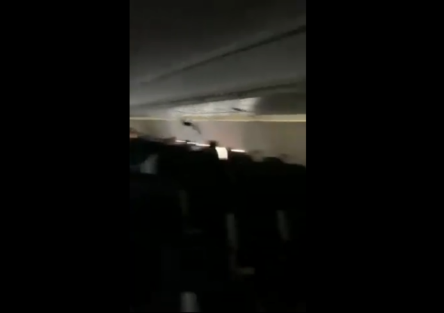Bat Sneaks Onto Spirit Airlines Flight