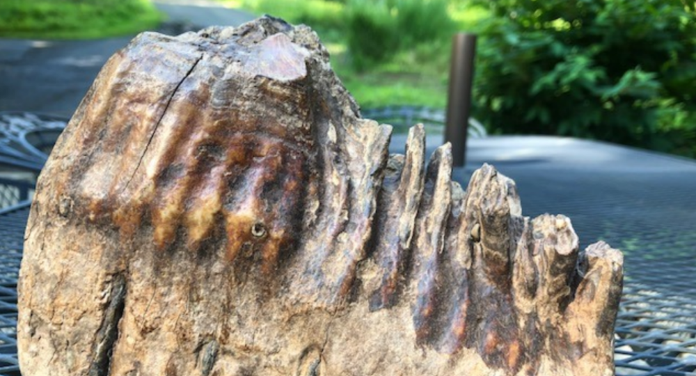Woolly Mammoth Tooth Discovered in US Creek by Minor