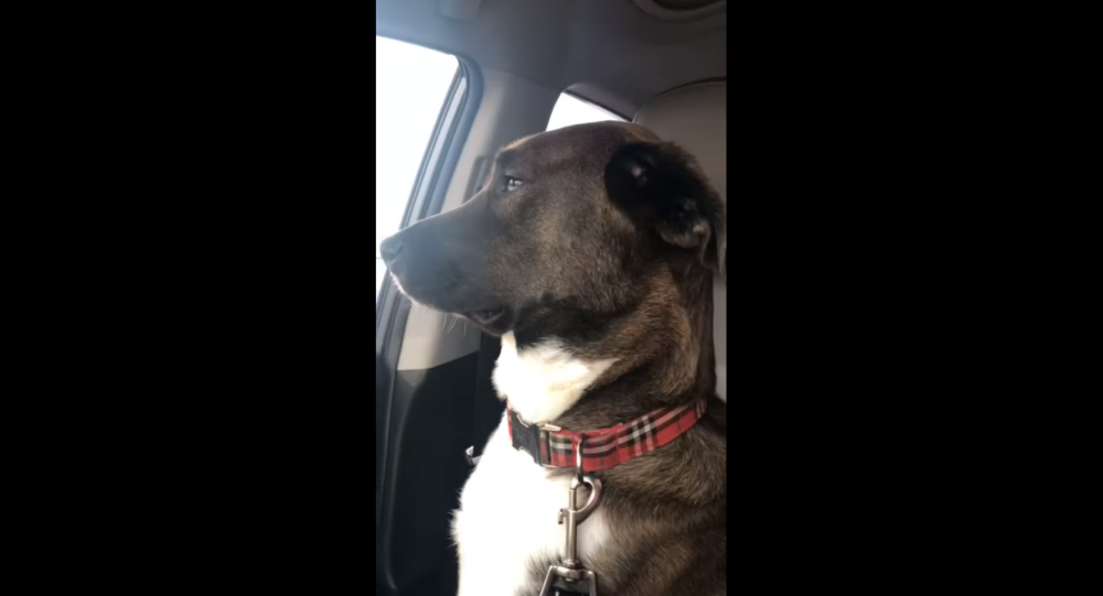 Dog Freezes Hooman Out After Teeth Cleaning