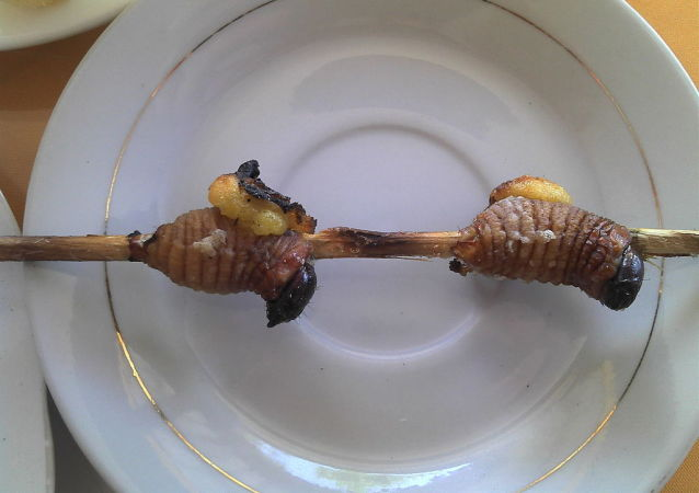 Grilled maggots for human consumption
