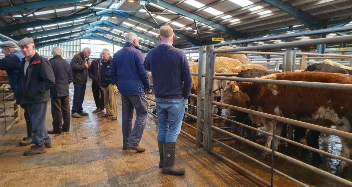 Farmers eye up cattle at a market in Enniskillen, Northern Ireland in October 2019