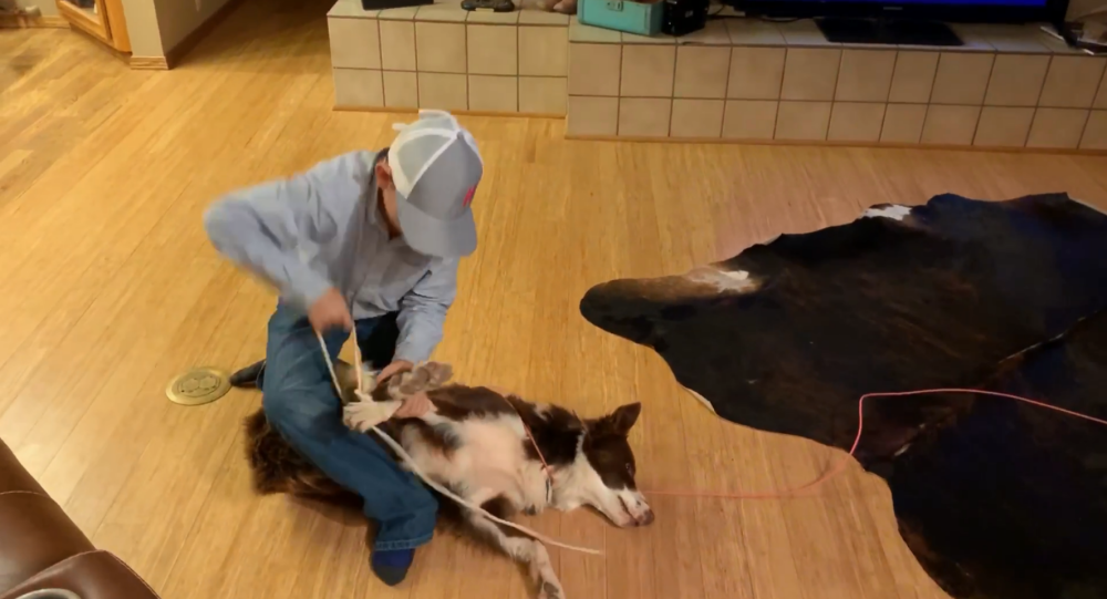 US Child Practices Cowboy Roping Skills on Patient Pup