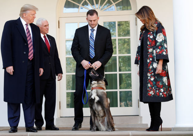 U.S. President Donald Trump poses with Vice President Mike Pence, first lady Melania Trump and Conan, the U.S. military dog that participated in and was injured in the U.S. raid in Syria that killed ISIS leader Abu Bakr al-Baghdadi, while standing with the dog's military handler on the colonnade of the West Wing of the White House in Washington, U.S.,  November 25, 2019.