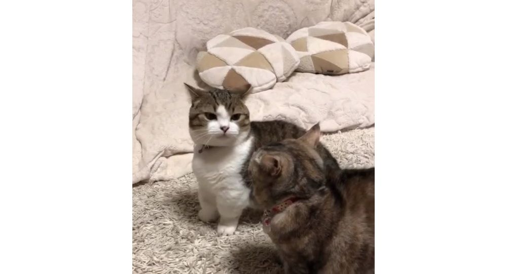 Two cats having a fight