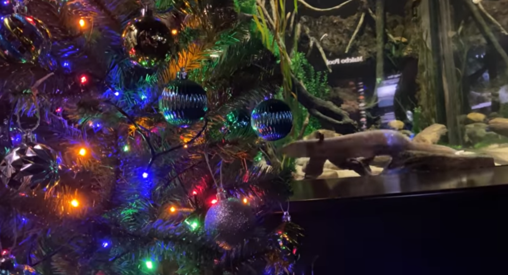 Eel Offers Up Electrifying Christmas Decorations at US Aquarium