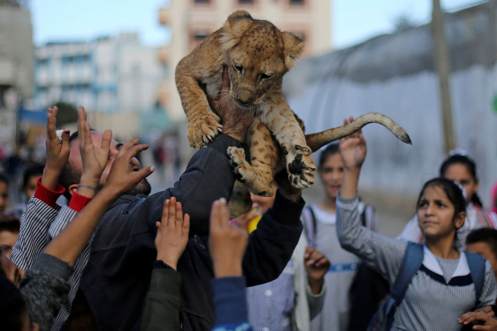 A Palestinian man carries a lion cub as he shows it to children in Rafah refugee camp in the southern Gaza Strip December 4, 2019.