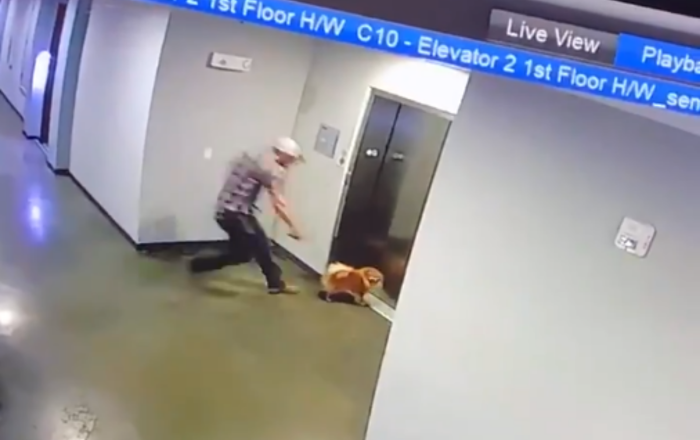 Heroic Man Saves Pup Whose Leash Gets Caught on Elevator