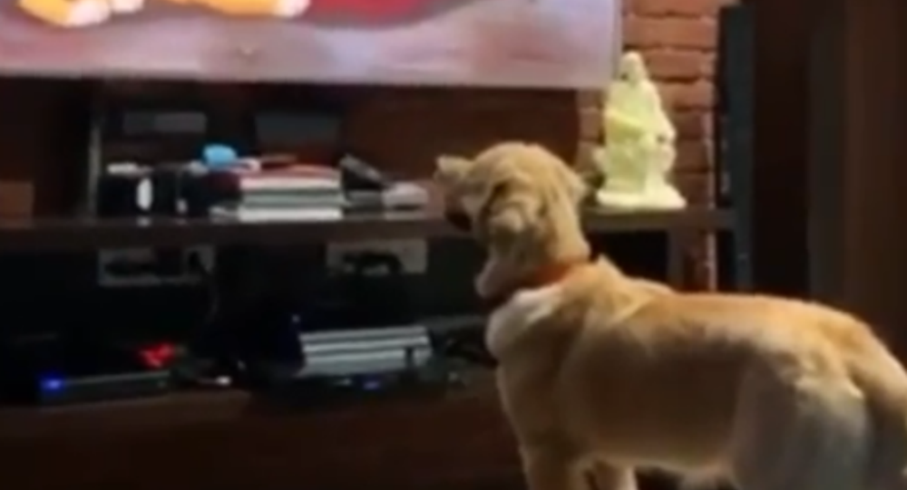 Circle of Life: Sweet Golden Retriever Moved by Iconic 'Lion King' Scene