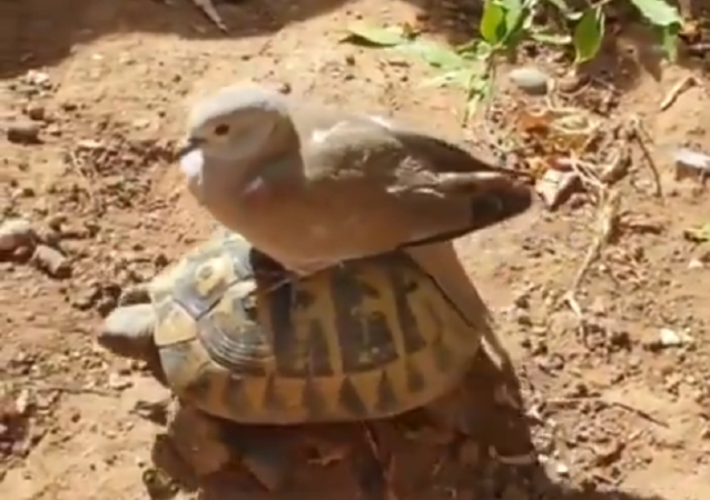 turtle and bird
