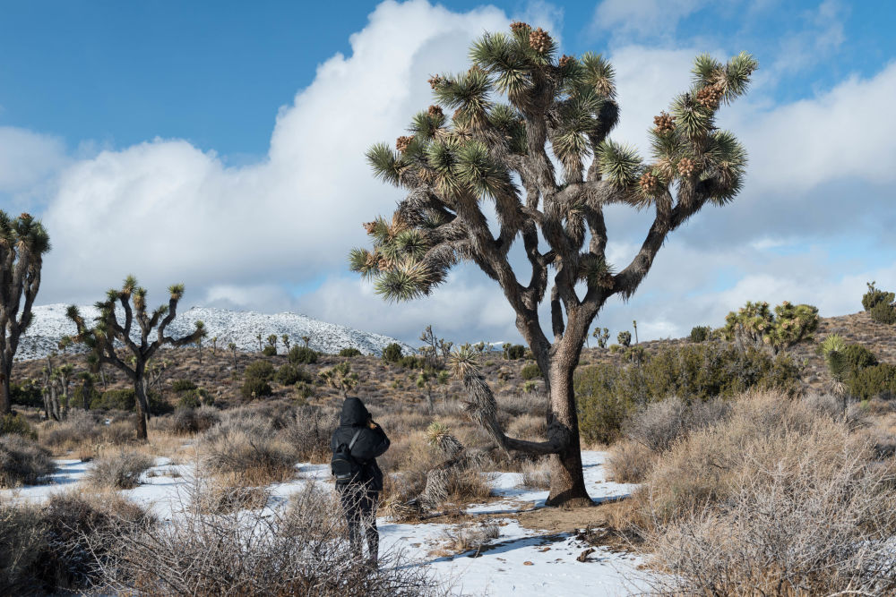 A visitor at the Joshua Tree National Park in California
