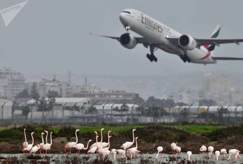 Pink flamingos at Salt Lake outside the Larnaca airport in Cyprus