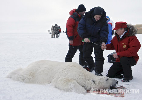 Putin and the polar bear on Franz Josef Land