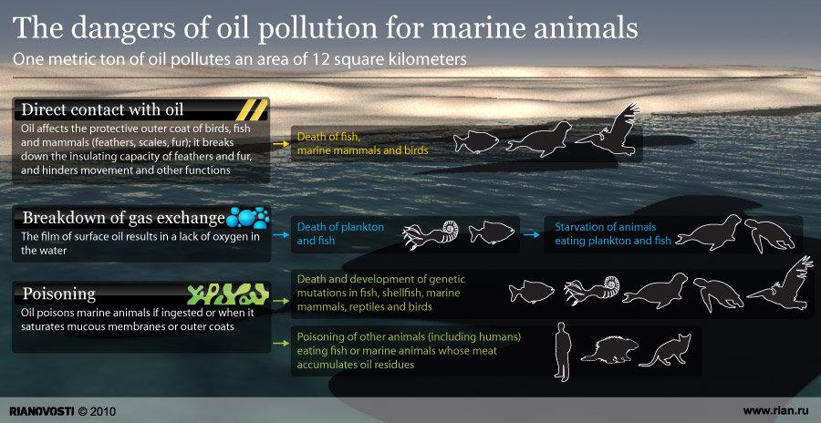 How oil spills endanger sea life