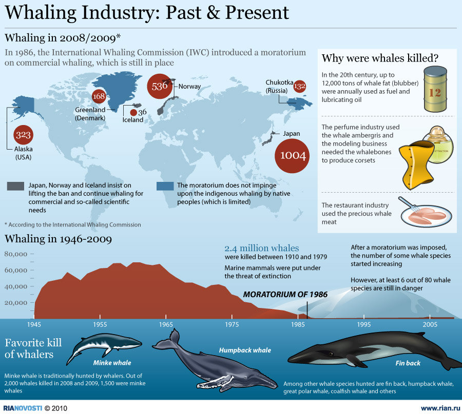 should the international ban on the hunting of whales be lifted