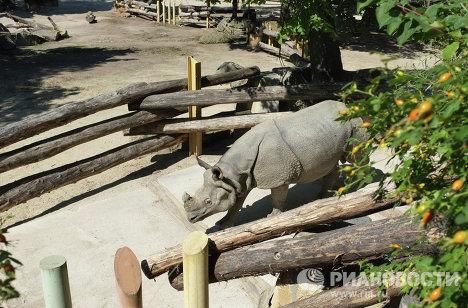 Носорог в венском зоопарке Шенбрунн