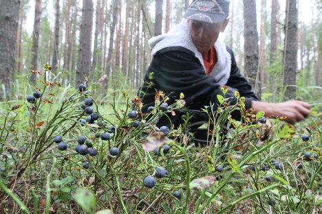 работа в лесу в омске и омской области ваш ребенок