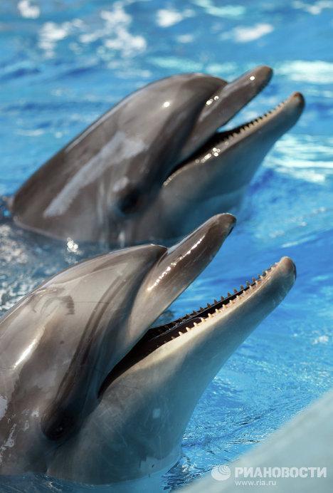 Самый крупный в России дельфинарий открылся в Сочи
