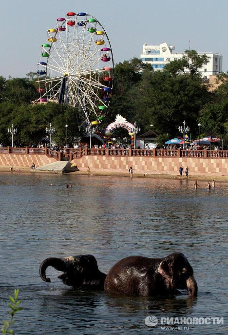 Индийские слонихи Магда и Дженни купаются в Спортивной гавани Владивостока