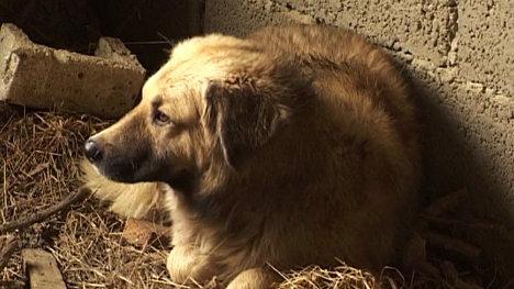 Пес Мухтар из Крымска, который потерял во время наводнения хозяйку и до сих пор ждет ее